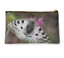 Apollo or Mountain Apollo butterfly  Studio Pouch