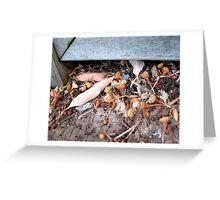 Aussie autumn litter Greeting Card