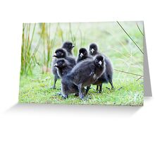 The brood revealed , six native hen chicks  Greeting Card