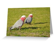 galah depth of field  Greeting Card