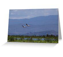 Pelicans flying over Lake Naivasha Greeting Card