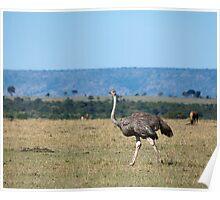Ostrich on the Masai Mara Poster