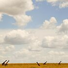 the seven giraffes by nicolemarie72
