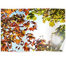 Autumn Leaves with Sunflare Poster
