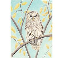 Owl By Day Photographic Print