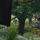 Deer in the wild by akwel