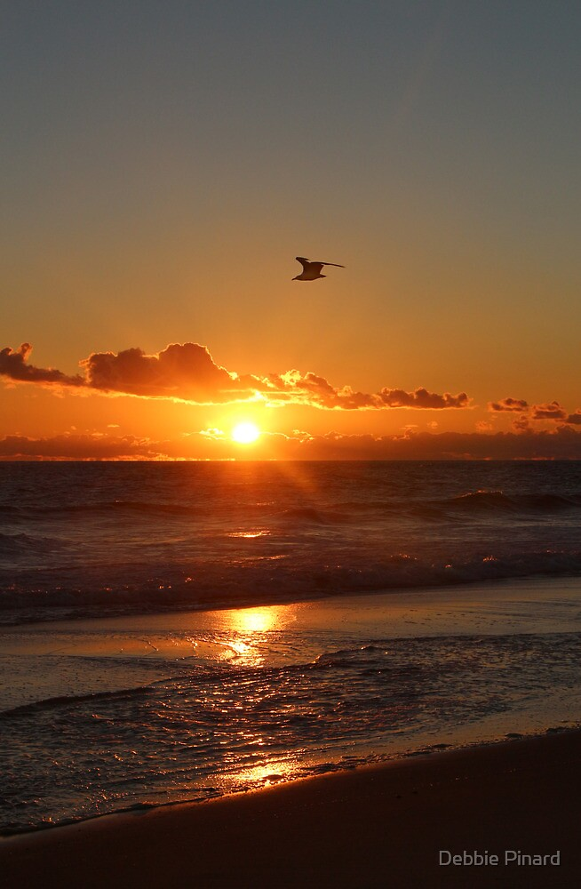 Sunrise Flight, Provincetown Massachusetts by Debbie Pinard