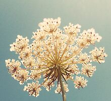 Queen Anne's Lace by Cassia Beck