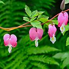 Bleeding Hearts with Fern by magicaltrails