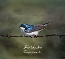 Tree Swallow by Vickie Emms