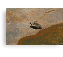Australia's most endangered marine mammals.  Canvas Print