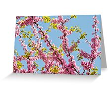 Judas Tree Flower And Leaves Greeting Card