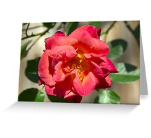 Passionately Pink Rose Greeting Card