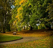 Autumn at Valley Gardens by Colin Metcalf