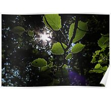 sun burst leaves Poster