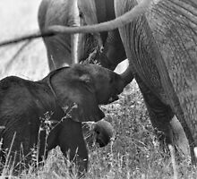 """""""Familial Bonds"""" - One (B&W) by Andreas Koerner"""