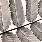 Monochrome leaf by marina63
