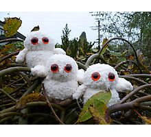 Hand Knitted Three cute Owl babies Photographic Print