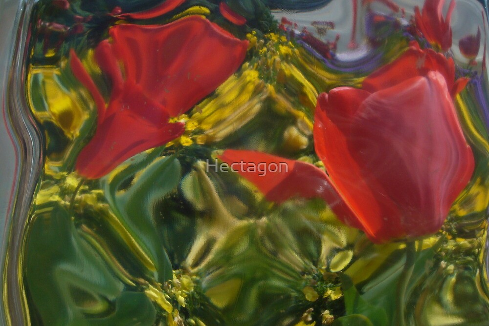 Tulips by Hectagon