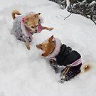 Snow wrestling by KanaShow