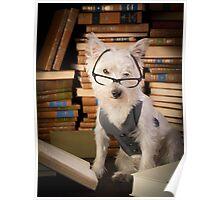 Bookworm Dog Poster