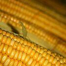 Corn on the Cob by Colin Shepherd