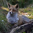 Foxy lady by Peter Wiggerman