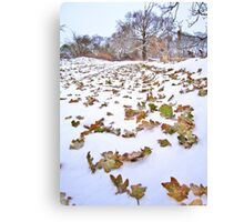 Winter before fall Canvas Print