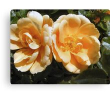 LAST BLOOMS OF SUMMER  Canvas Print
