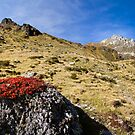 Fall in the Alps by Walter Quirtmair
