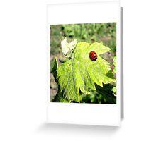 nature pose Greeting Card