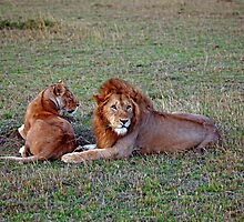 Lions at Dusk by Sue Robinson