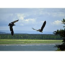 Playful Eagles Photographic Print