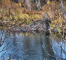 Home on the Creek by Scott Hendricks