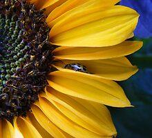 Sunny Flowery Day by Jocelyn Hyers
