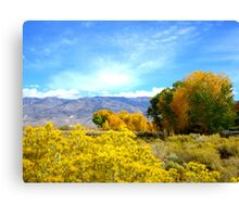 Fall In The Whites Canvas Print