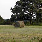 The Hay Field by WildestArt
