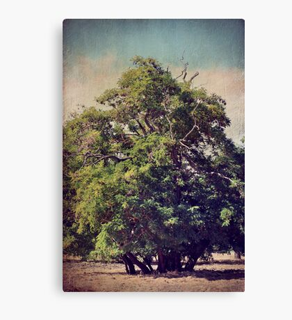 For All We Had Canvas Print