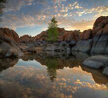 TreeBetween by Bob Larson
