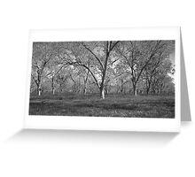 Pecan Orchard, Magnolia Springs, Al. Greeting Card