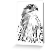 Drawing of Red Tailed Hawk Greeting Card