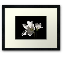 Another White Rain Lily Framed Print