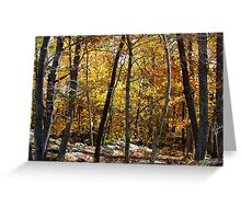 Autumn Woods, New York Greeting Card