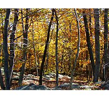 Autumn Woods, New York Photographic Print