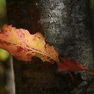 Autumn Orange by Deborah  Benoit