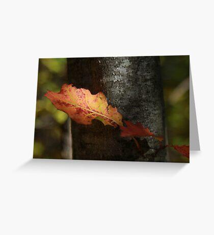 Autumn Orange Greeting Card