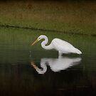 Fishing In The Morning by Deborah  Benoit