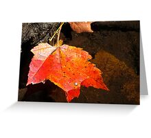 Autumn Maple Greeting Card
