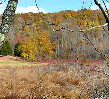 Autumn meadow, New York State by Alberto  DeJesus