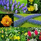 Keukenhof 'Blue Cross' Collage by Kathryn Jones
